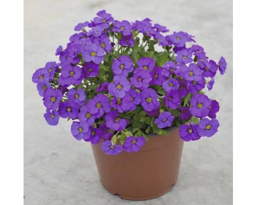Blaukissen FloraSelf® H 40-60 Ø 14 cm sortiert