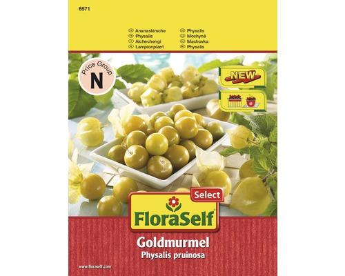 Gemüsesamen FloraSelf Select Ananaskirsche/Physalis pruinosa 'Goldmurmel'